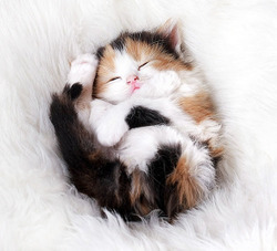 cute-kittens-4-57b30a939dff5__605.jpg