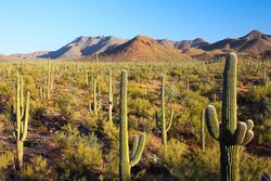 Saguaro_National_Park_-_Flickr_-_Joe_Parks.jpg
