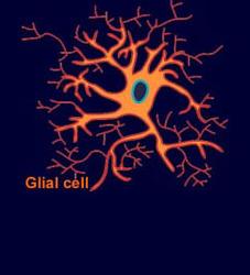 glial_cell.jpg