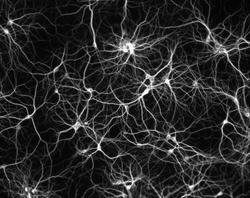 neuronas-bn.jpg
