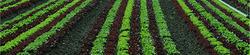 agribusiness.jpg