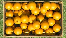 bpp-20160514-183755-box-w-oranges-02611.png