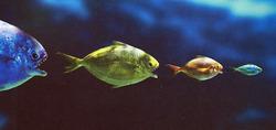 FishEatFish.jpg