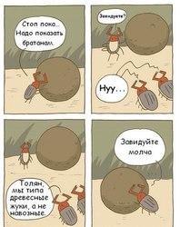 Комиксы-жуки-живность-удалённое-1363529.jpeg