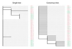 single_vs_consensus_tree copy.pdf